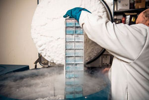 doctor freezing cancer research samples