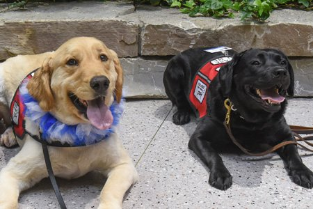 therapy dogs sitting at henry ford west bloomfield