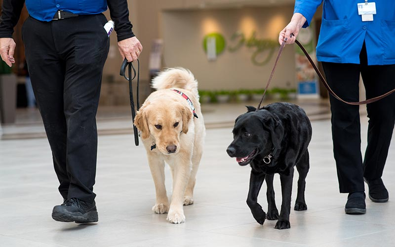 west bloomfield hospital therapy dogs walking
