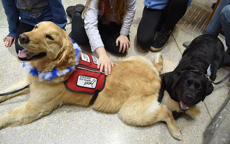 henry ford west bloomfield hospital pet therapy dogs 2